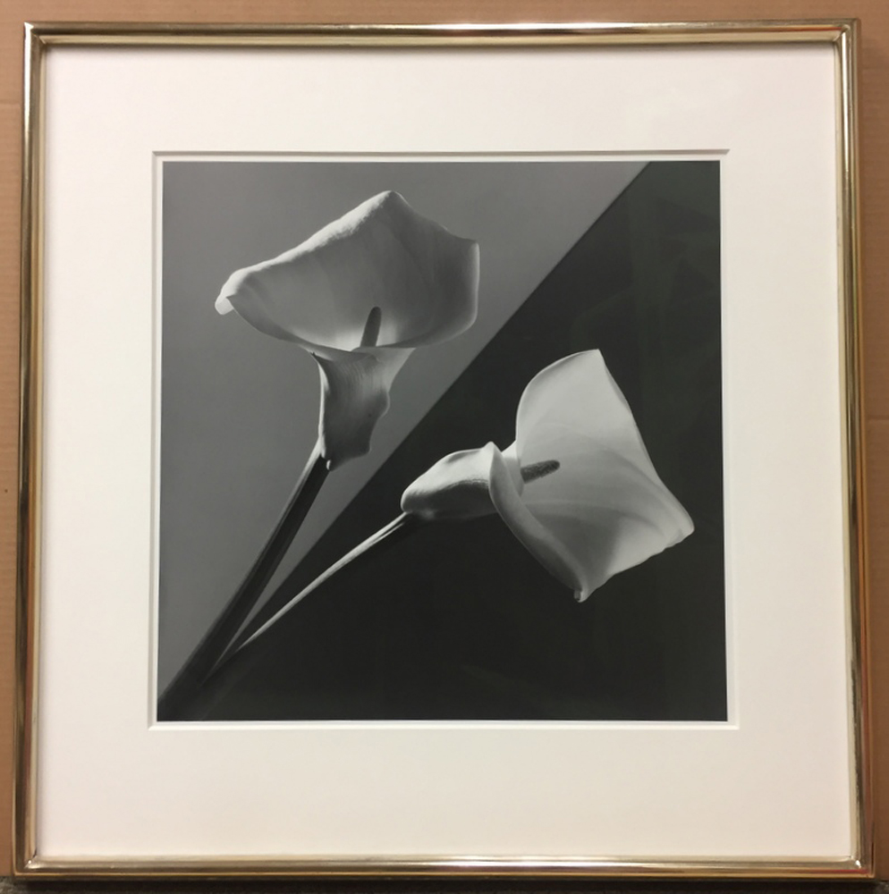 Robert Mapplethorpe (American, 1946-1989)      Calla Lily