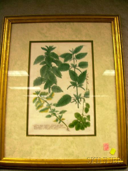 Three Framed Hand-tinted Botanical Engravings