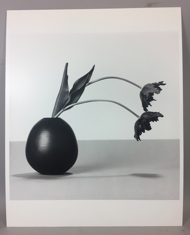 Robert Mapplethorpe (American, 1946-1989)      Flowers