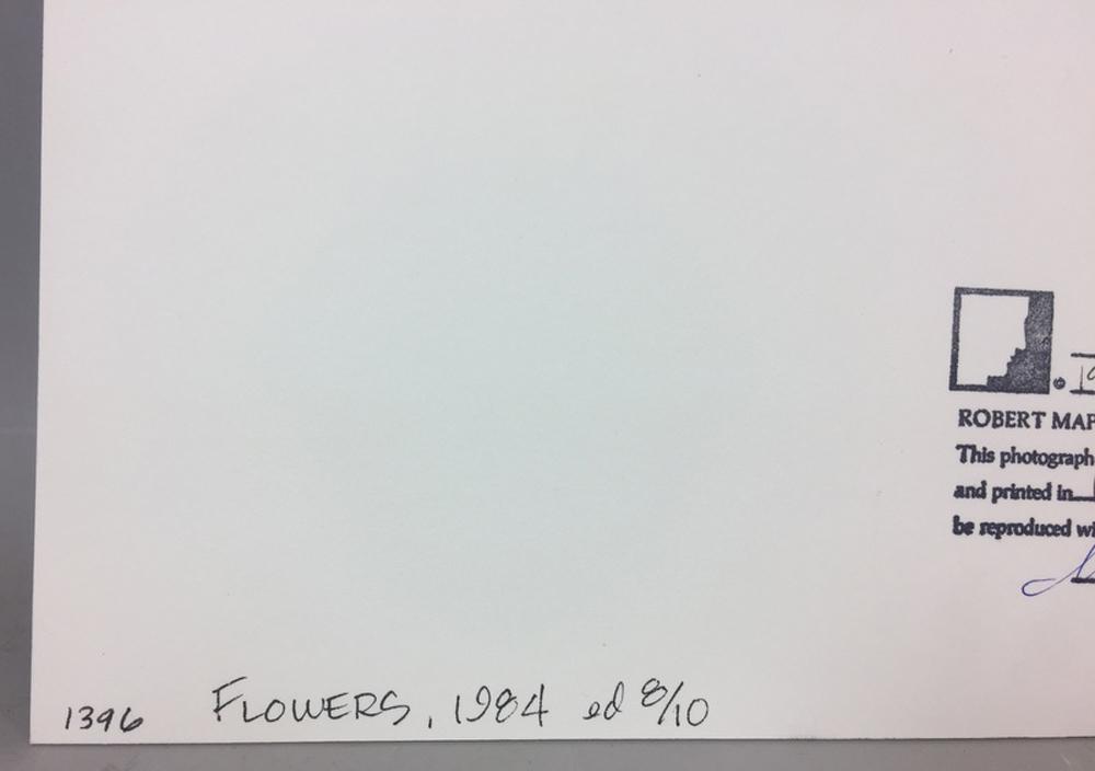 Robert Mapplethorpe (American, 1946-1989)      Flowers