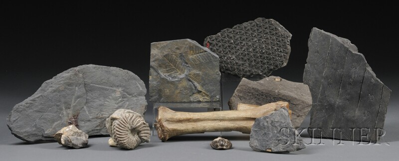 Collection of Ten Fossils