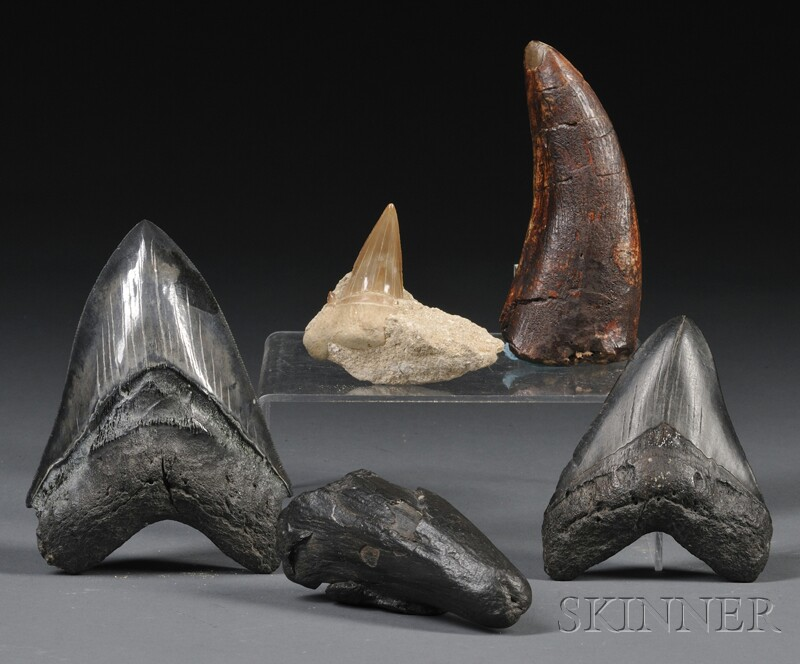 Collection of Teeth