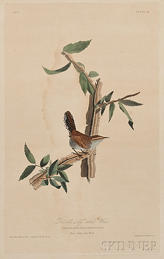 Audubon, John James (1785-1851) Bewick's Long-tailed Wren,    Plate 18.
