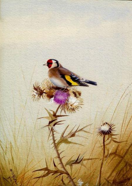 Philip Rickman (British, 1891-1982)    Goldfinch