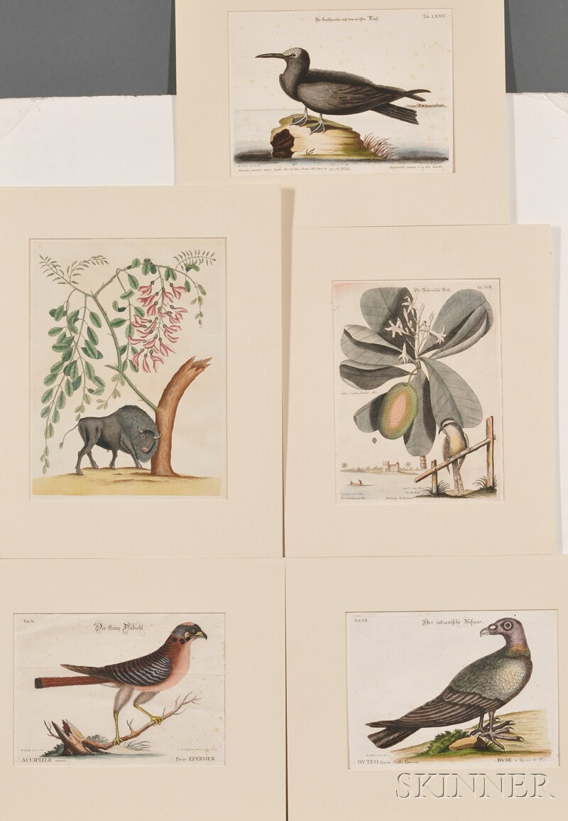 Mark Catesby (English, 1679?-1749),       Four Hand-colored Ornithological Engravings