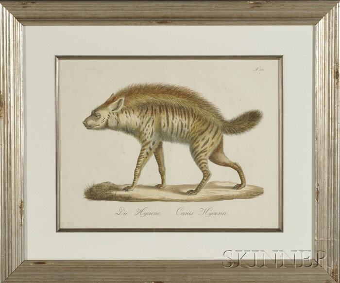 Framed Lithograph of a Hyena