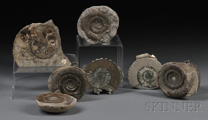 Six Ammonites