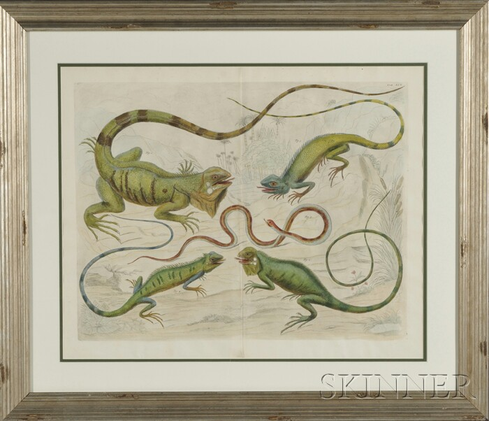 Framed Hand Colored Engraving of Iguanas