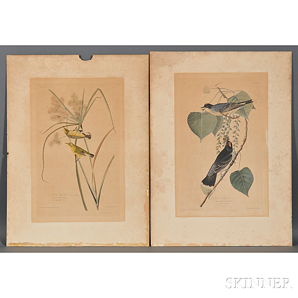 Audubon, John James (1785-1851) Prairie Warbler.   Plate 3 [and] Tyrant Flycatcher.   Plate 79.