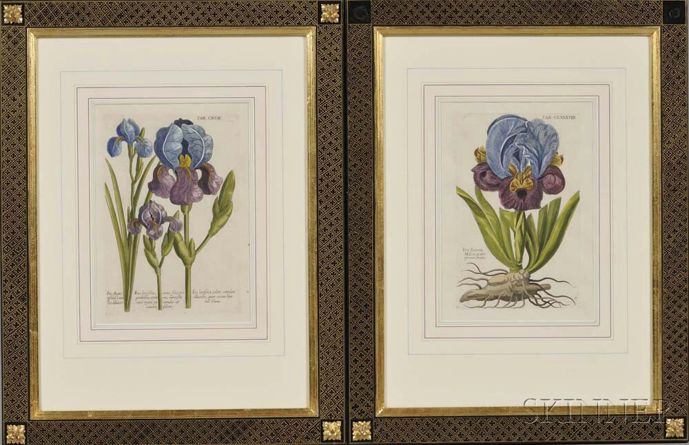 Botanical Prints, Eight Hand-colored Engravings.