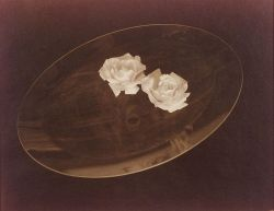 Robert Steinberg (American, 20th Century)  Two White Roses #I, Cambridge, March 1980.