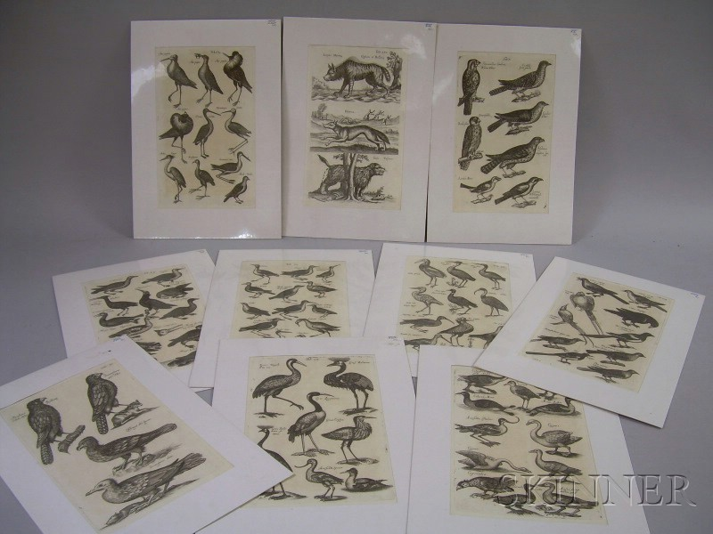 Ten German Matted Bookplates Depicting Mostly Ornithological Subjects