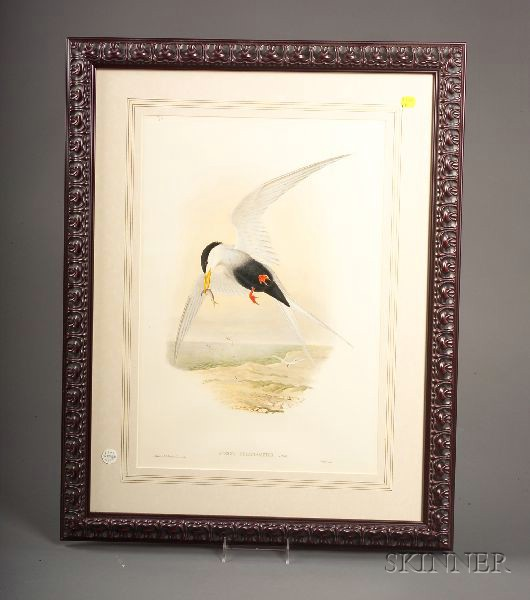 Five Framed Decorative Ornithological Prints