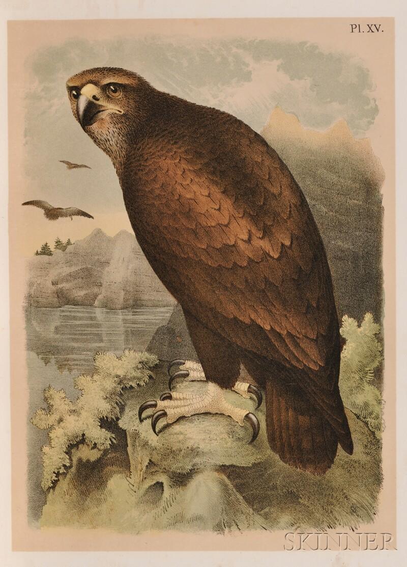 (Ornithology)