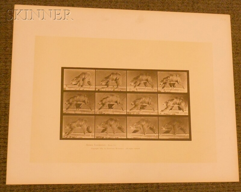 Eadweard Muybridge (British, 1830-1904)      Two Images from ANIMAL LOCOMOTION:   Plate 698 (Gazelle)