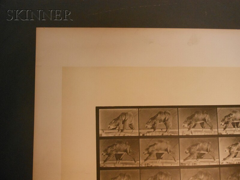 Eadweard Muybridge (British, 1830-1904)      Two Images from ANIMAL LOCOMOTION:   Plate 307 (Discus Throw)