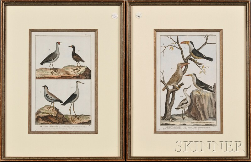 Continental School, 18th Century      Lot of Two Framed Ornithological Illustrations from Histoire Naturelle