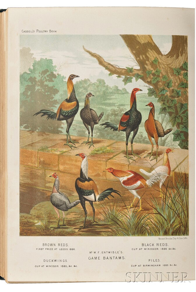 Wright, Lewis (fl. circa 1870-1890) The Illustrated Book of Poultry.