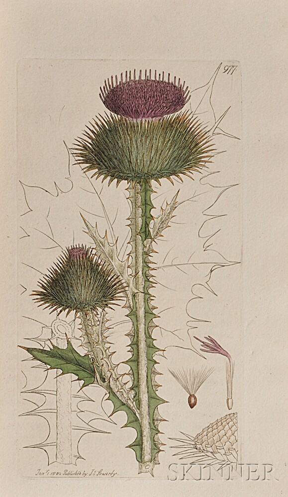 Sowerby, James (1757-1822) English Botany  , Partial Set, Eighteen Volumes.