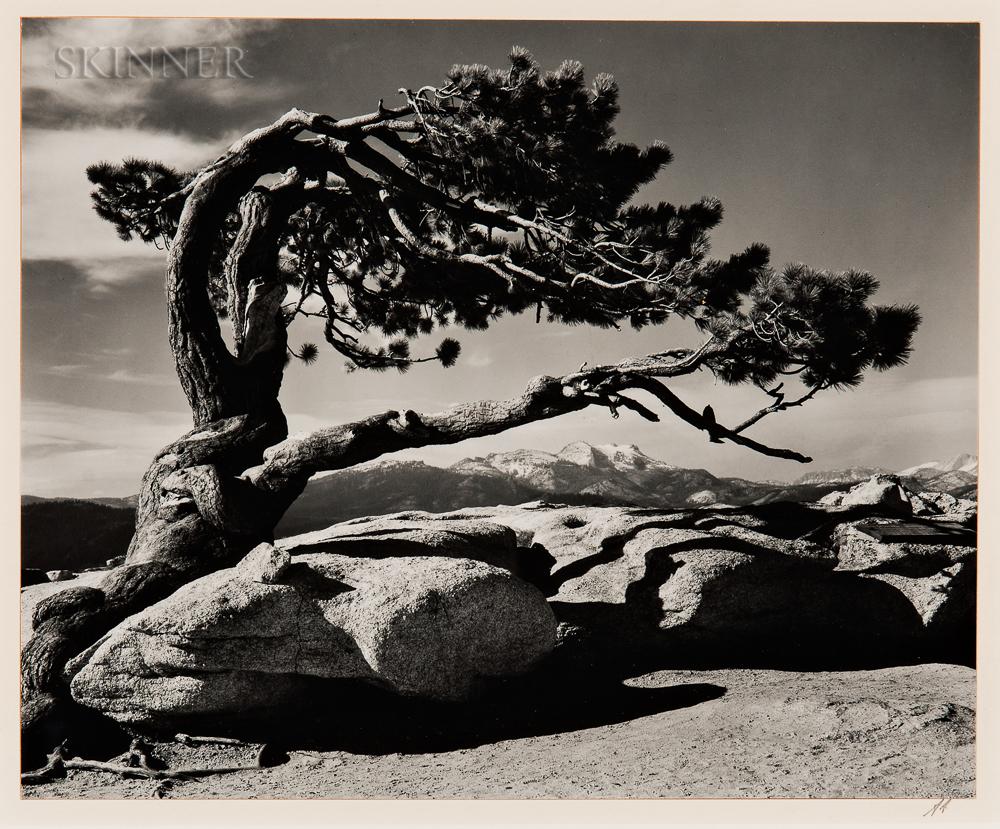 Ansel Adams (American, 1902-1984)      Jeffrey Pine, Sentinel Dome