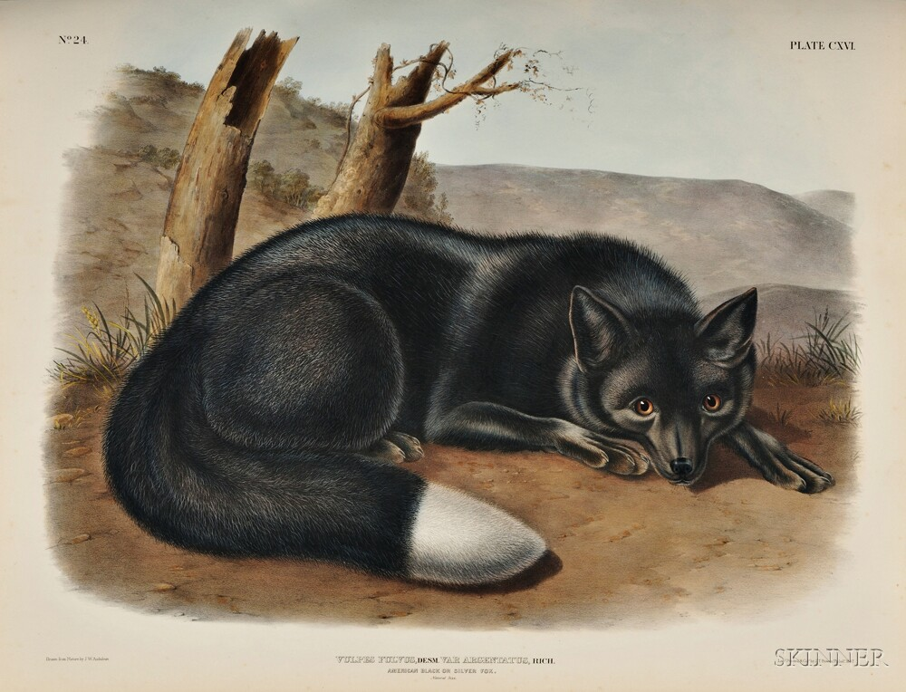 Audubon, John James (1785-1851) and Reverend John Bachman (1790-1874)   The Viviparous Quadrupeds of North America.