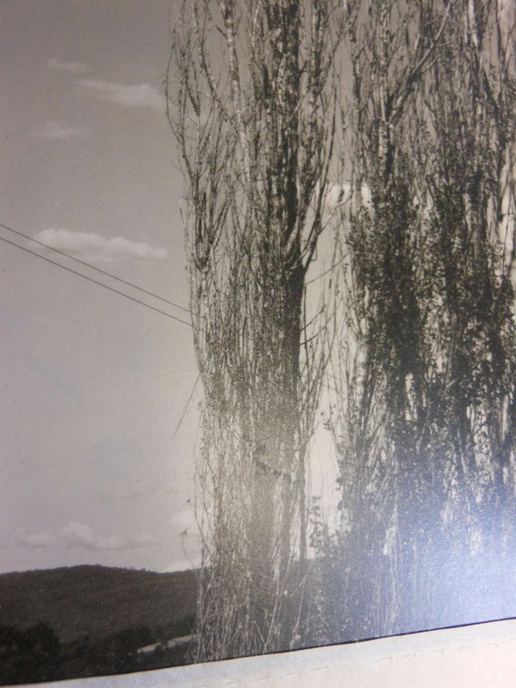 Alfred Stieglitz (American, 1864-1946)      The Two Poplars, Lake George