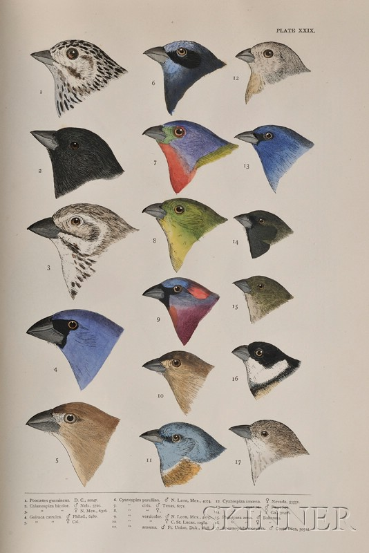 (Ornithology), Baird, S.F. , Brewer, T.M., & Ridgway, R.
