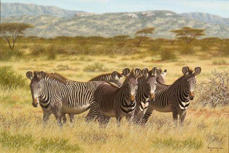 Michael Nicholson (American, 20th Century)    Zebras