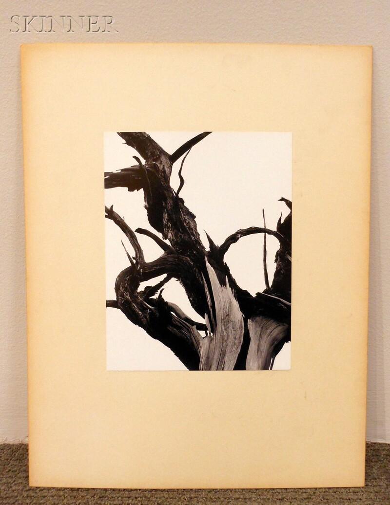 Ansel Adams (American, 1902-1984)      Dead Tree, Sunset Crater National Monument, Arizona