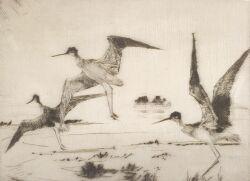 Frank Weston Benson  (American, 1862-1951)  Three Yellowlegs