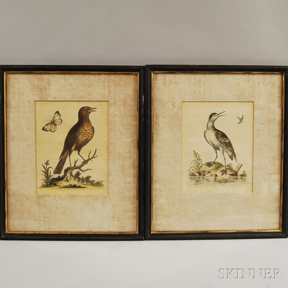 Two Framed George Edwards (1694-1773) Ornithological Prints