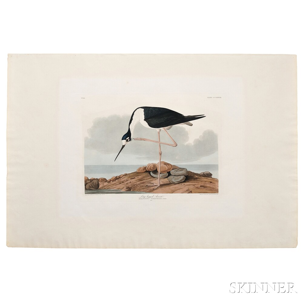 Audubon, John James (1785-1851) Long-legged Avocet,   Plate CCCXXVIII.