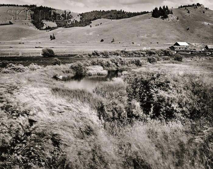 Olivia Parker (American, b. 1941)      Rivergrass, Stanley, Idaho