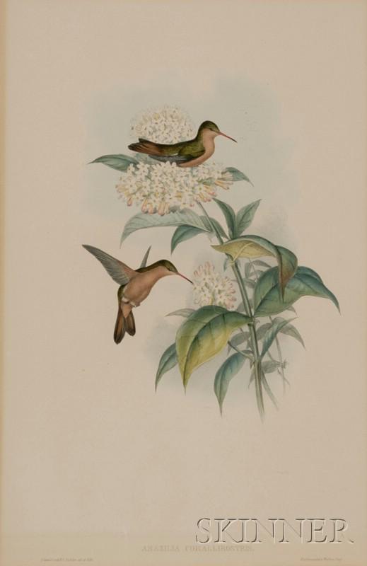 (Ornithological), Gould, J. & Richter, H.C.