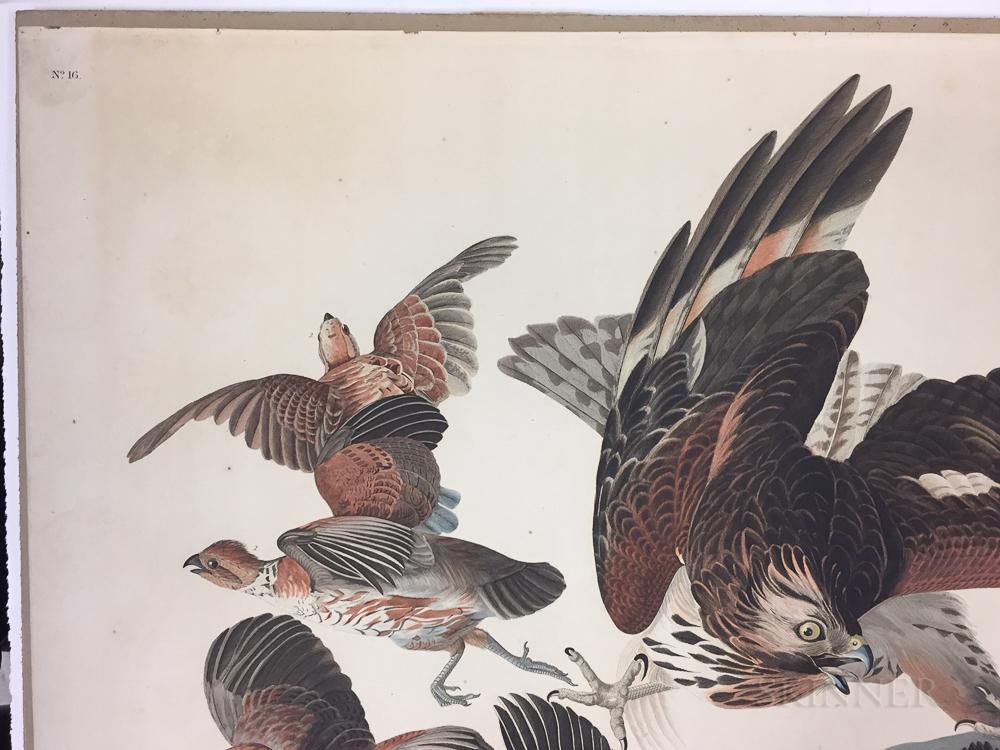 Audubon, John James (1785-1851) Virginian Partridge,   Plate 76.