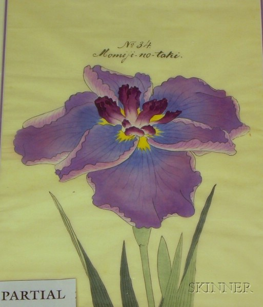 Two Unframed Japanese-style Floral Studies of Irises