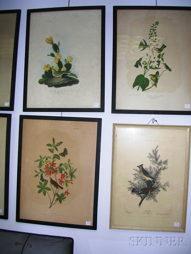 Set of Seven Framed Color Lithograph Ornithological Prints After John J. Audubon