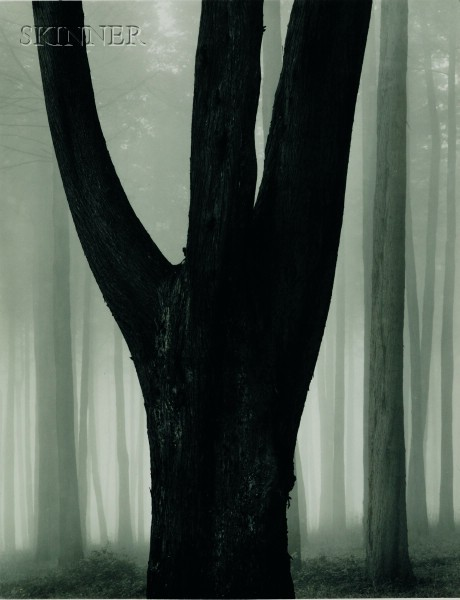 Don Worth (American, b. 1924)      Trees and Fog, San Francisco