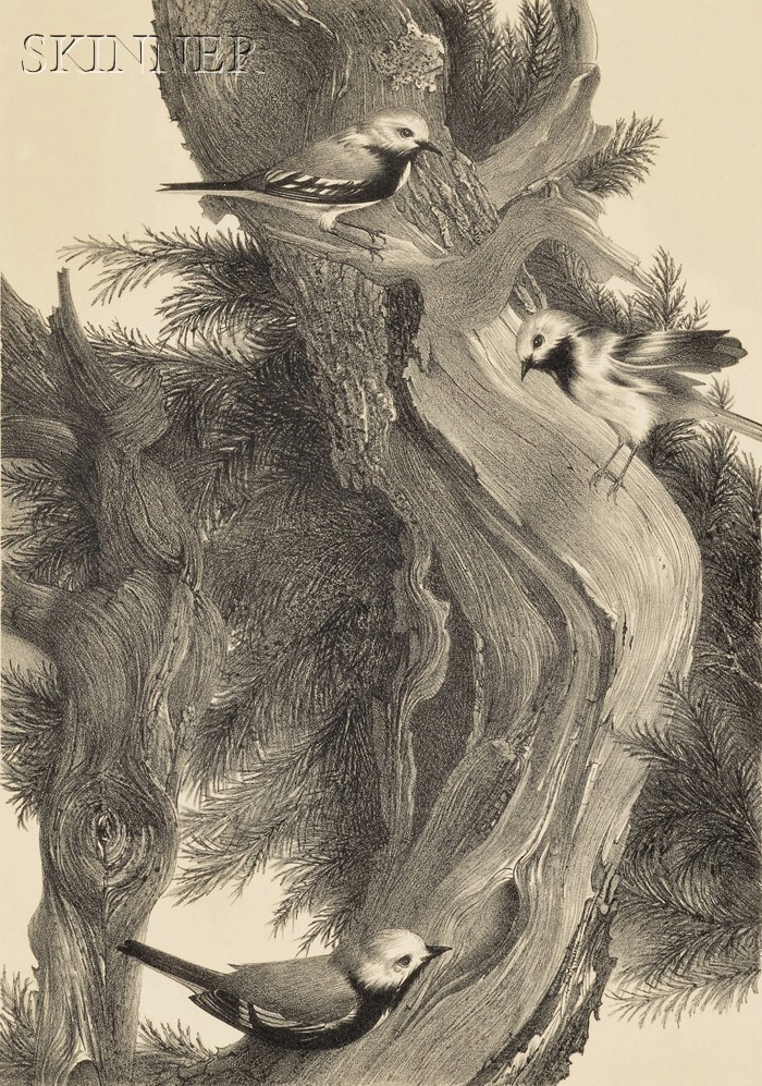 Stow Wengenroth (American, 1906-1978)      Warbler