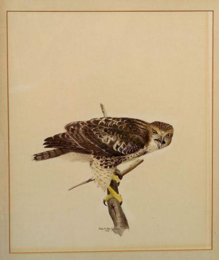 Robert Verity Clem (American, b. 1933)    Hawk
