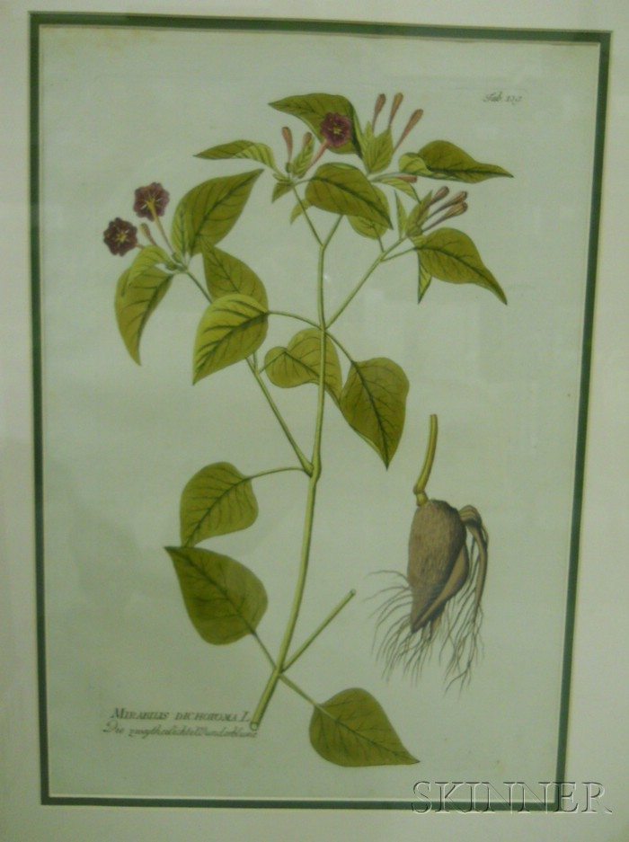 Set of Six Viennese Hand-colored Botanical Engravings