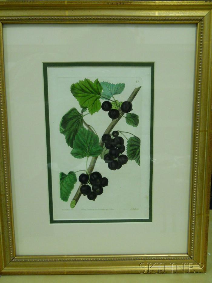 Set of Six English Hand-colored Botanical Engravings