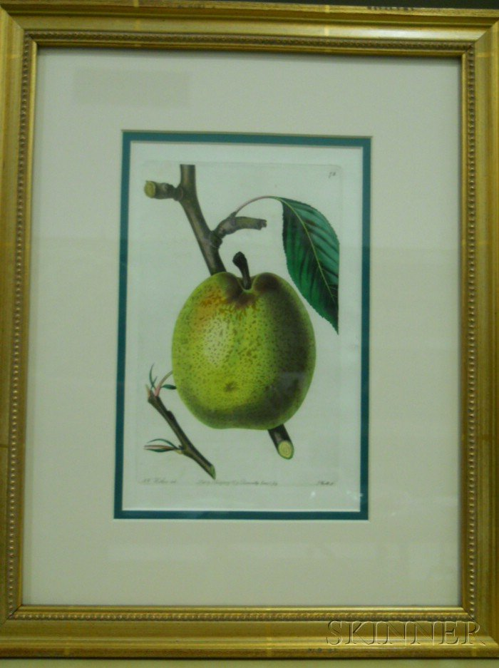Set of Eight English Hand-colored Decorative Engravings of Fruit