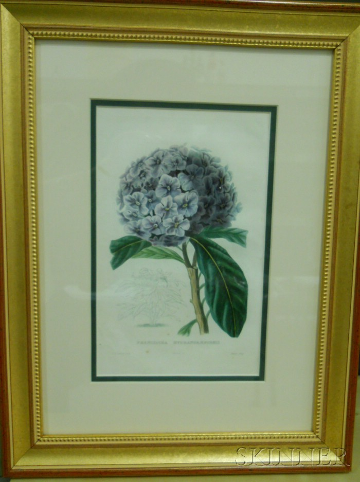 Set of Six French Hand-colored Decorative Botanical Engravings