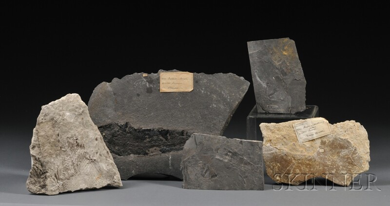 Group of Five Fossils