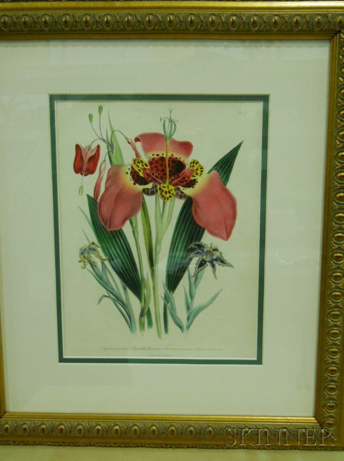 Set of Eight English Hand-colored Botanical Lithographs