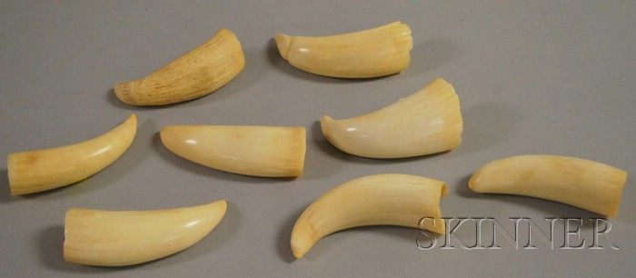 Eight Undecorated Whales' Teeth