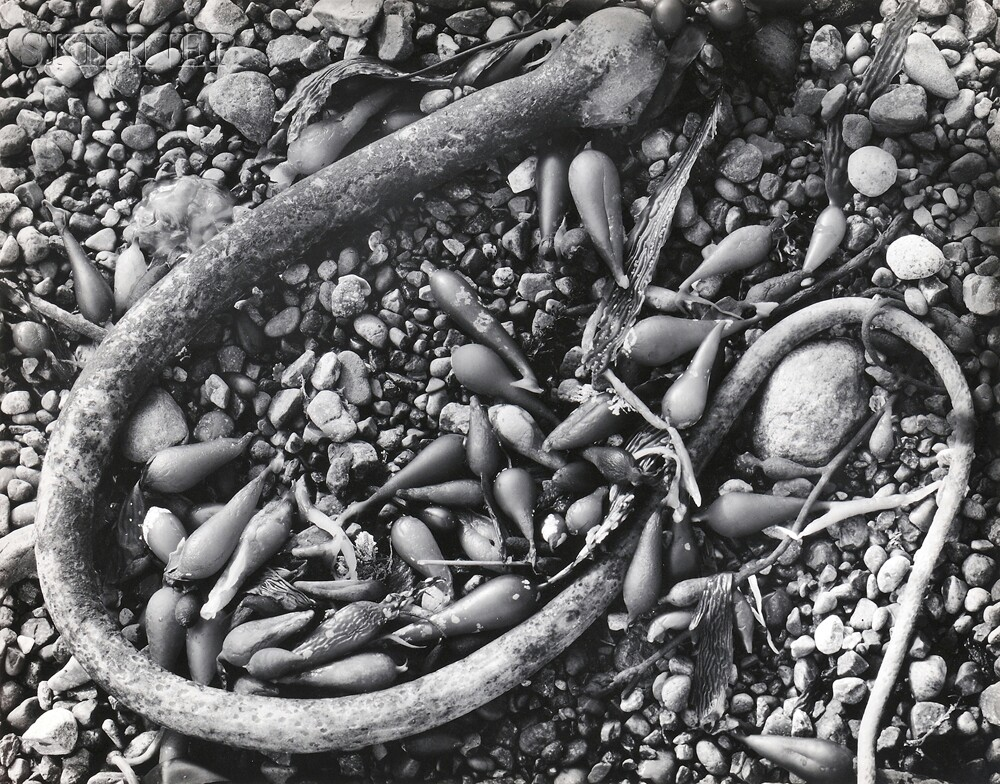 Ansel Adams (American, 1902-1984)      Seaweed and Pebbles