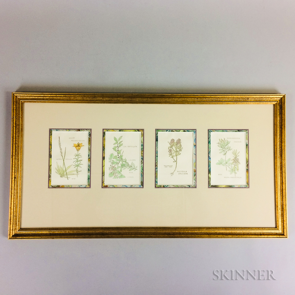 Nantucket Wildflowers: Four Botanical Book Illustrations by Anne Hinchman Together in a Common Frame.