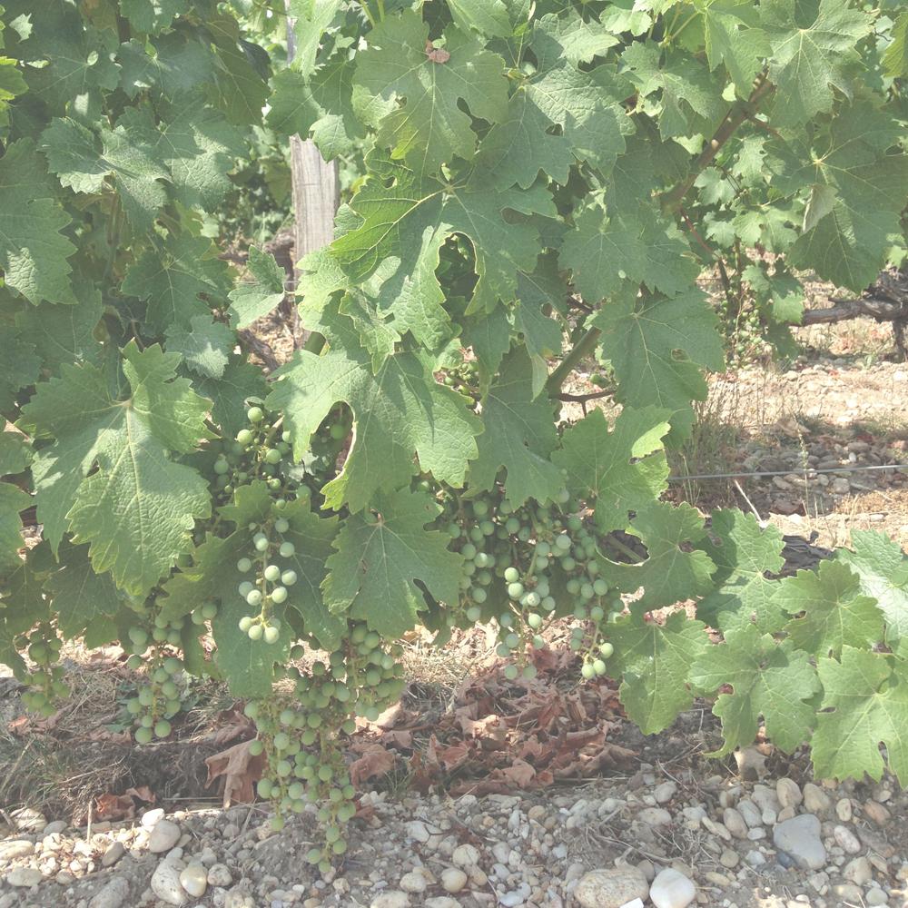 Abreu Cabernet Sauvignon Napa Valley 1997, 6 bottles (oc)